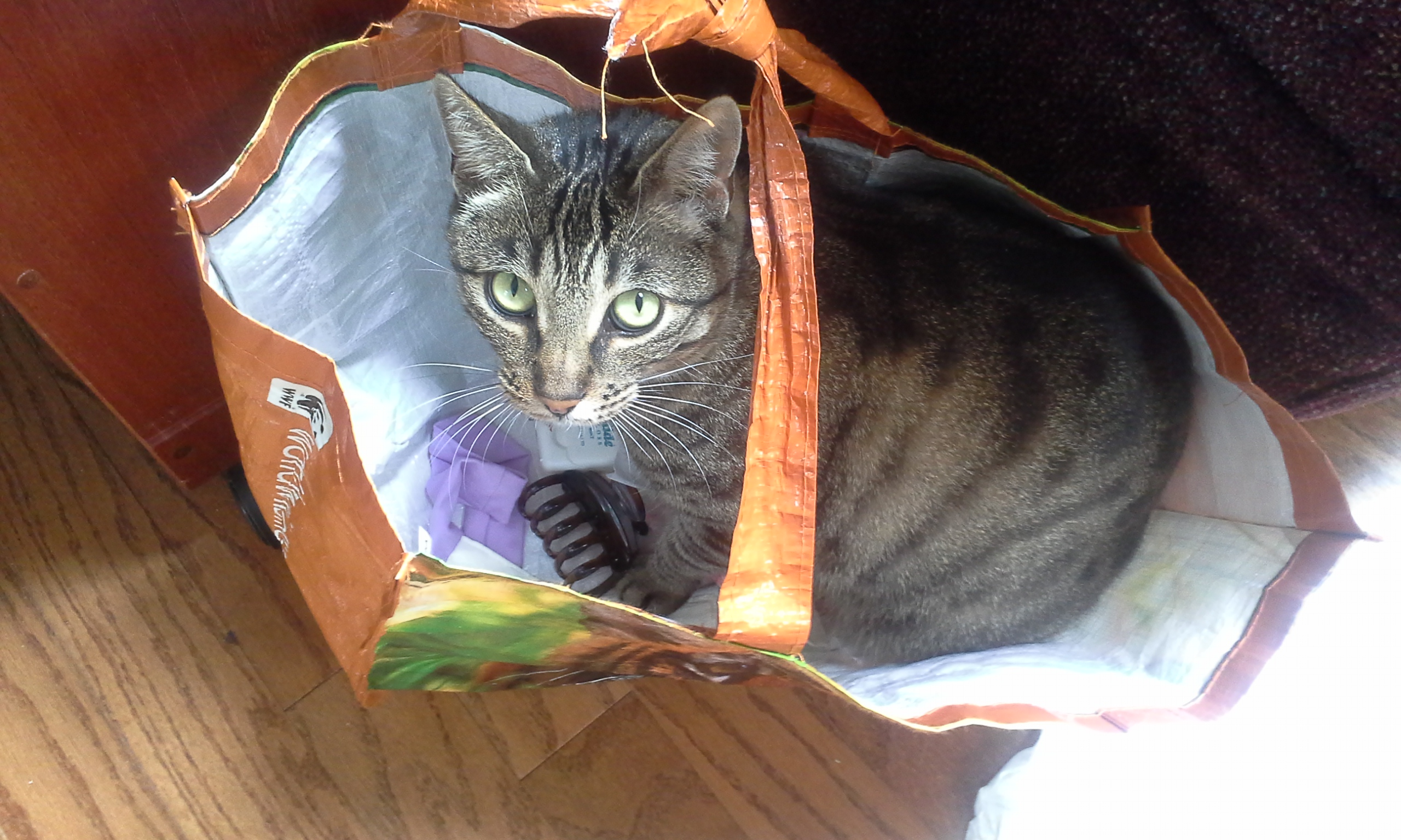 Curio in a World Wildlife Fund tote bag.