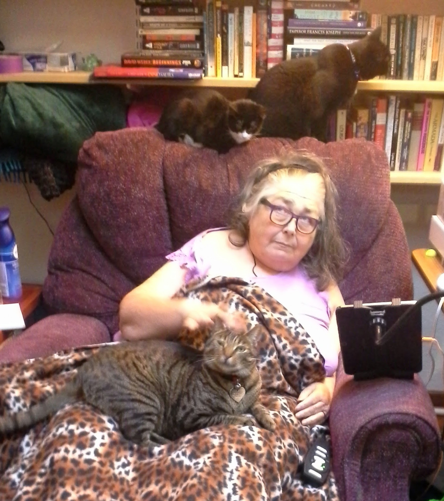 Colleen in her chair with Curio in her lap and the other two cats on          the chair back.